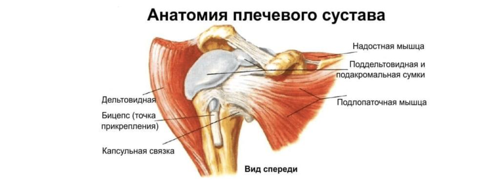 Лечить боль в плече в Николаеве